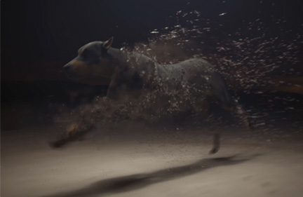 Dog FX